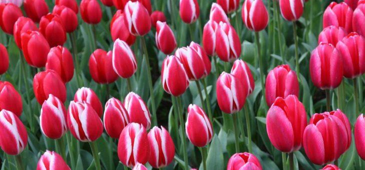 Der Frühling sprießt…