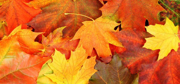 Der goldene Herbst!